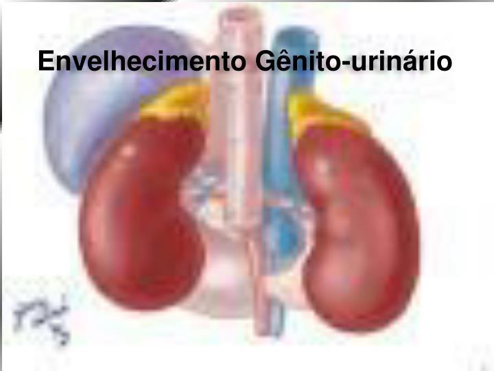 Envelhecimento Gênito-urinário