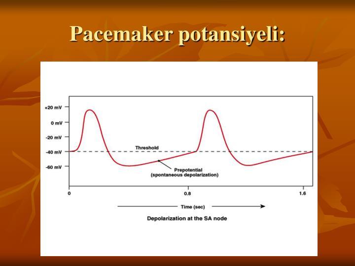 Pacemaker potansiyeli: