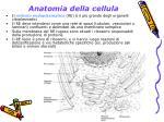 anatomia della cellula7