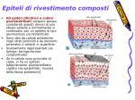 epiteli di rivestimento composti2