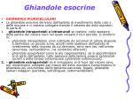 ghiandole esocrine1