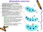 ghiandole esocrine7