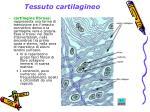 tessuto cartilagineo5