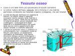 tessuto osseo1