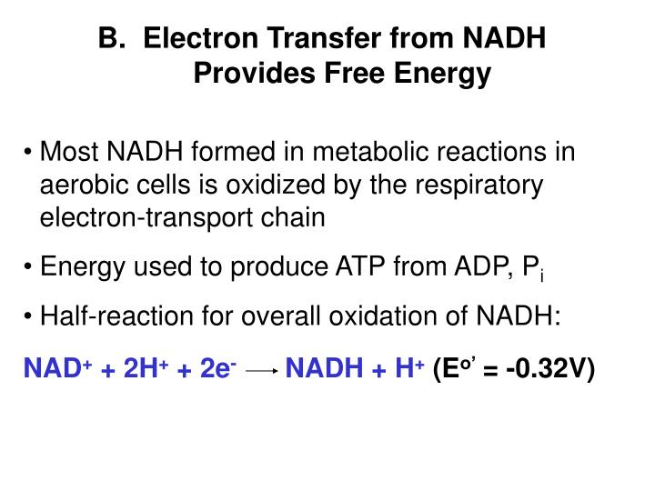 Most NADH formed in metabolic reactions in aerobic cells is oxidized by the respiratory electron-transport chain