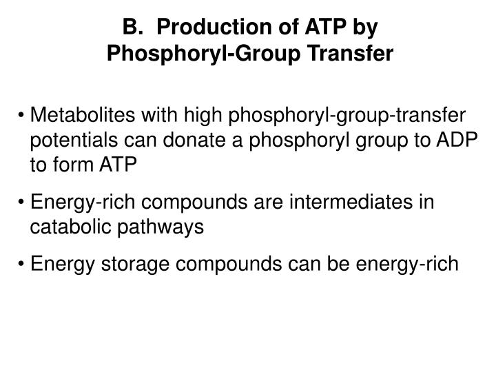 B.  Production of ATP by