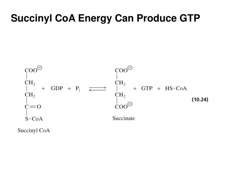 Succinyl CoA Energy Can Produce GTP
