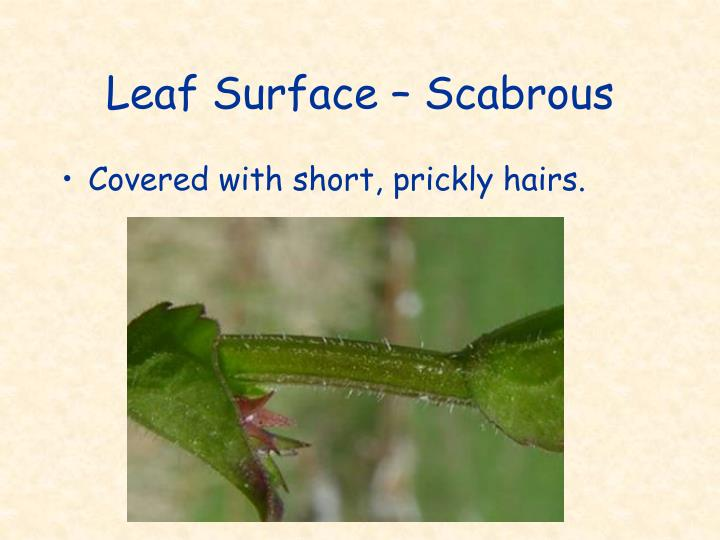 Leaf Surface – Scabrous