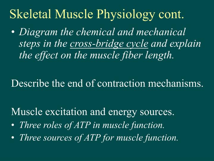 skeletal muscle physiology cont n.