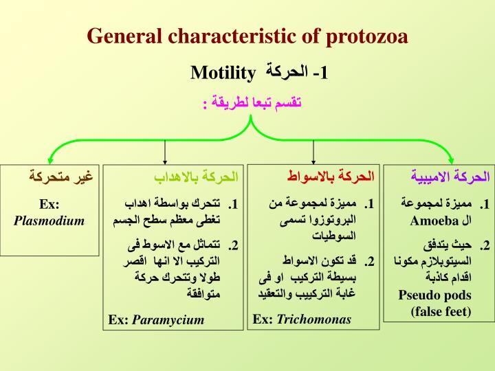 General characteristic of protozoa