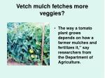 vetch mulch fetches more veggies