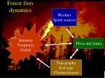 forest fires dynamics