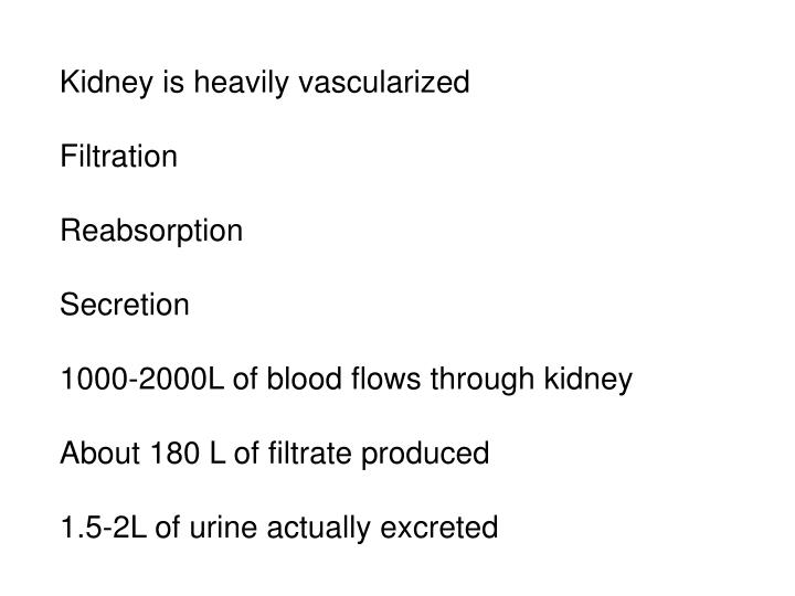Kidney is heavily vascularized