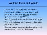 wetland trees and weeds