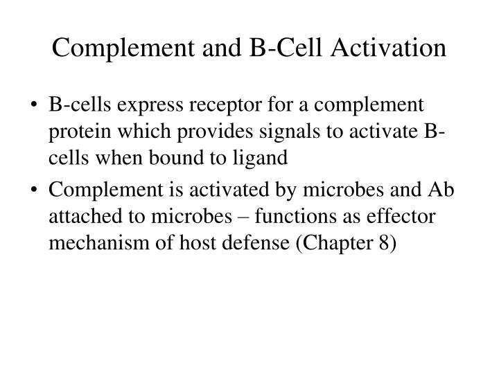 Complement and B-Cell Activation