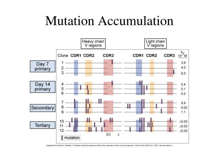 Mutation Accumulation