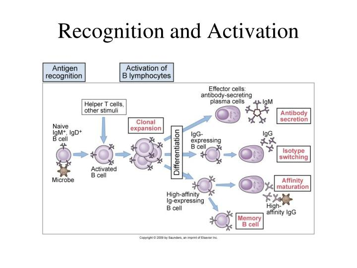 Recognition and Activation