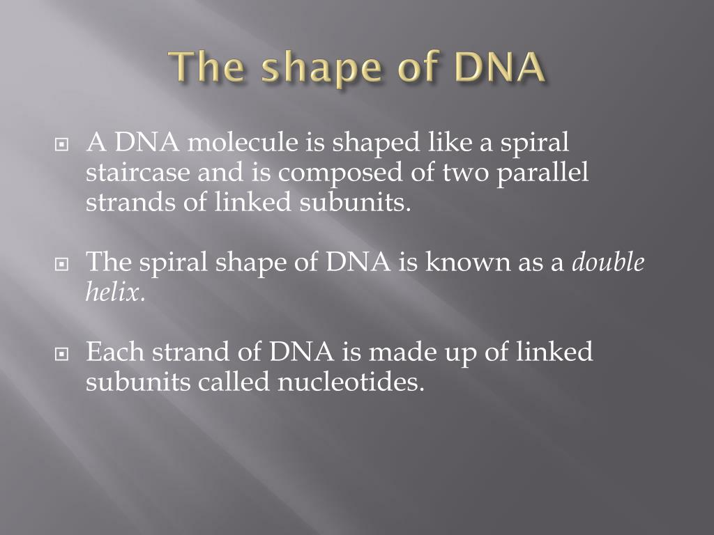 The shape of DNA