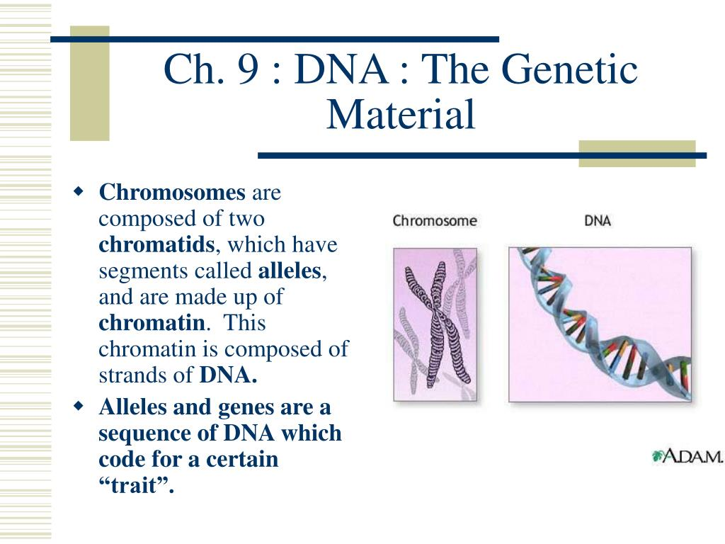 ch 9 dna the genetic material l.