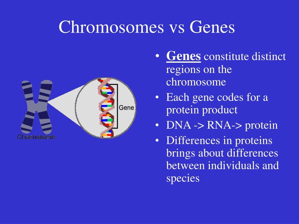 Chromosomes vs Genes