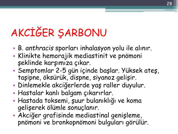 AKCİĞER ŞARBONU