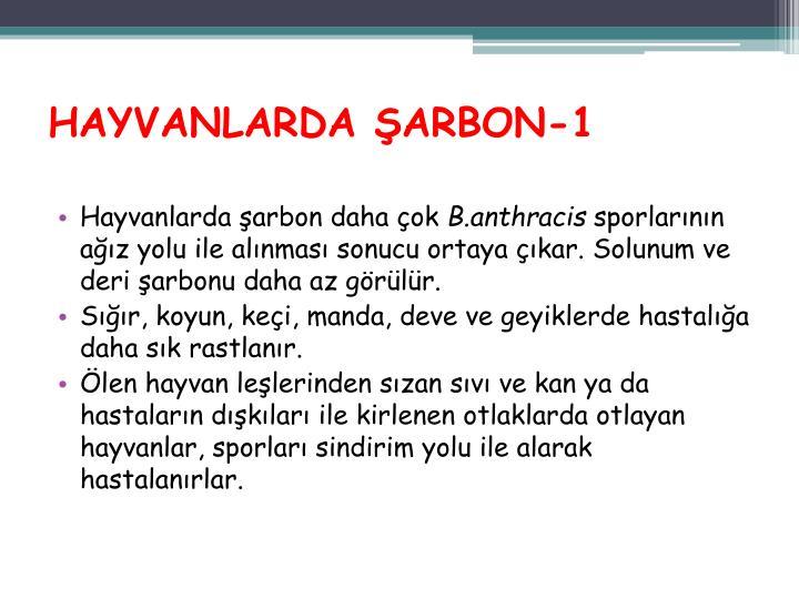 HAYVANLARDA ŞARBON-1