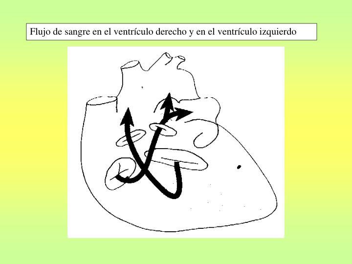 Flujo de sangre en el ventrículo derecho y en el ventrículo izquierdo