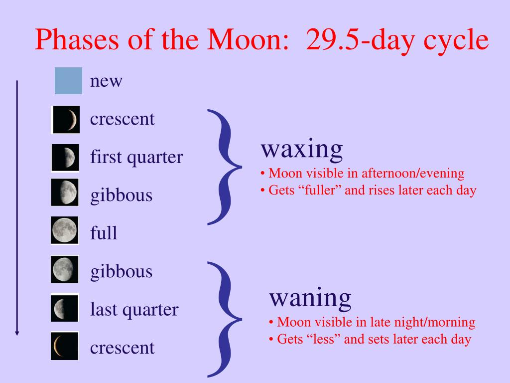 Phases of the Moon:  29.5-day cycle