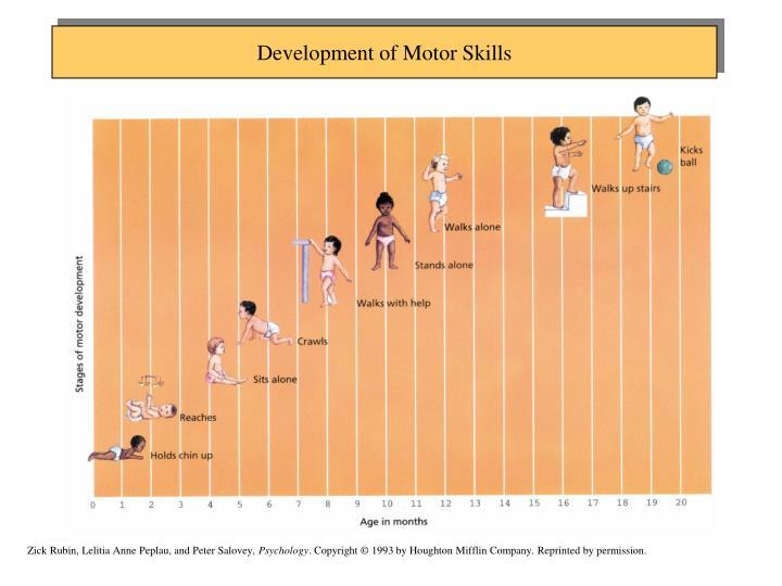 Development of Motor Skills