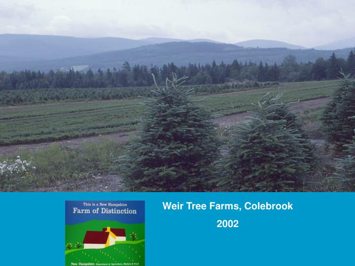 Weir Tree Farms, Colebrook
