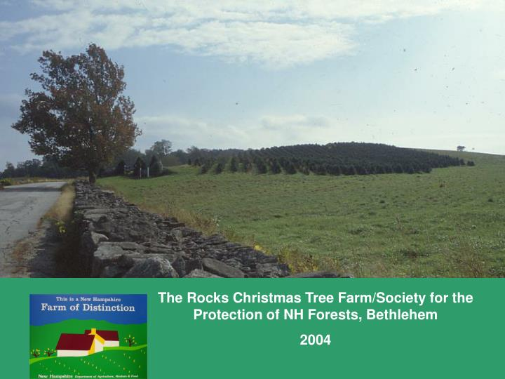 The Rocks Christmas Tree Farm/Society for the Protection of NH Forests, Bethlehem
