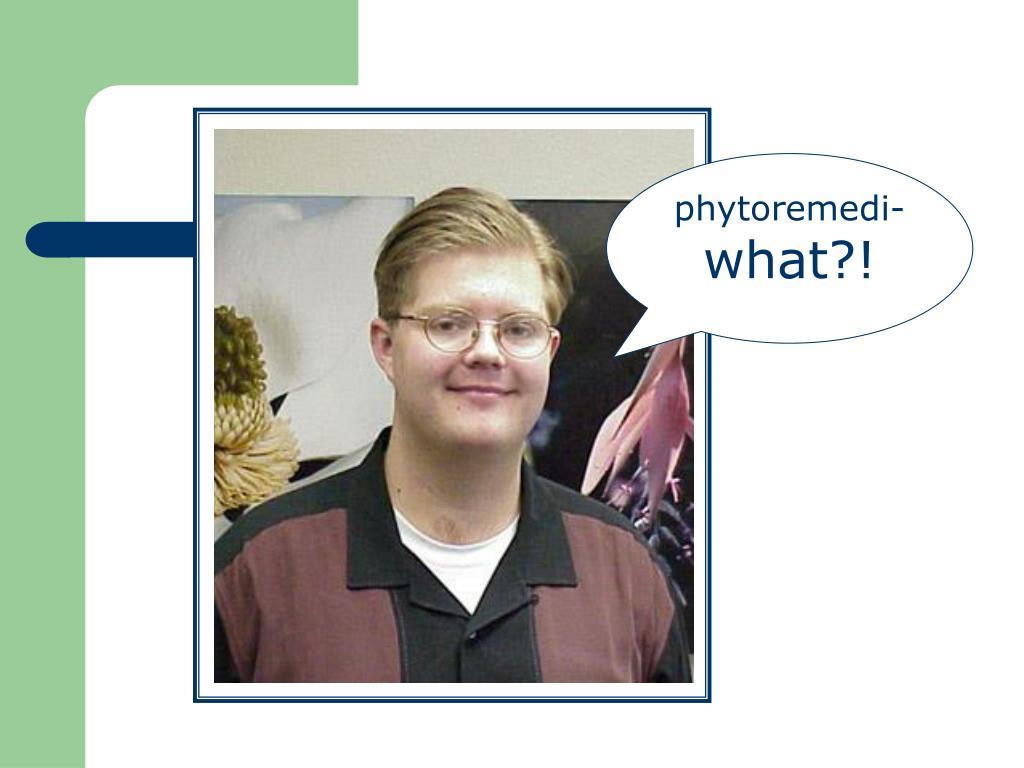 phytoremedi-