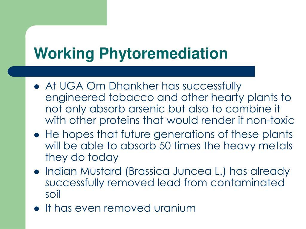 Working Phytoremediation