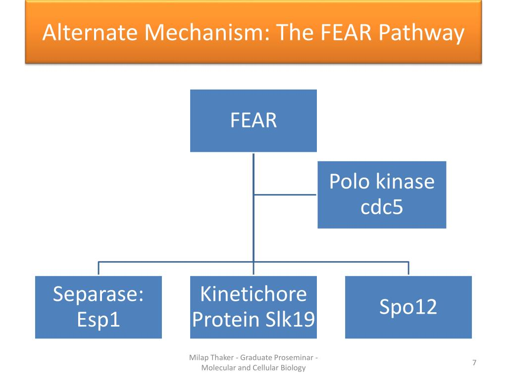 Alternate Mechanism: The FEAR Pathway
