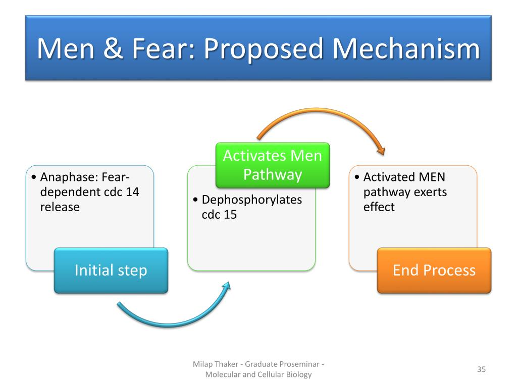 Men & Fear: Proposed Mechanism