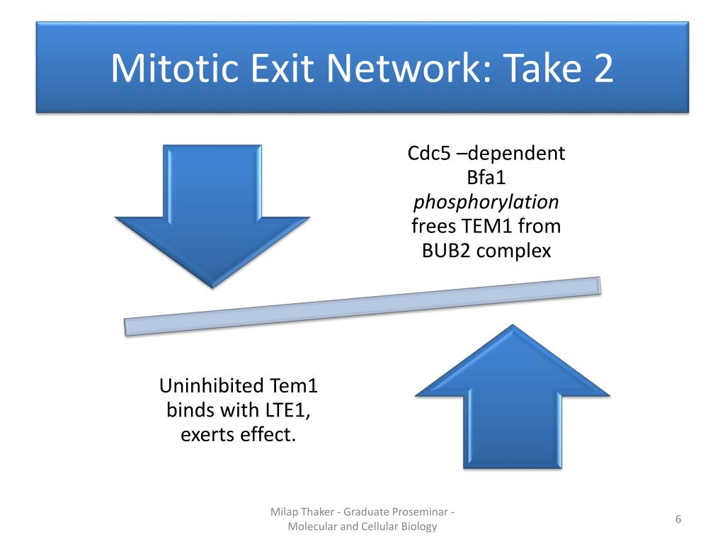 Mitotic Exit Network: Take 2