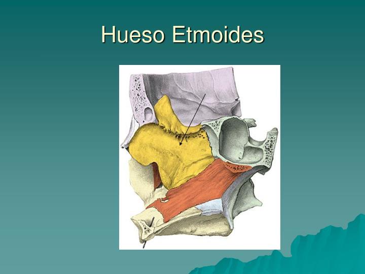 PPT - Osteología de Cráneo PowerPoint Presentation - ID:878437