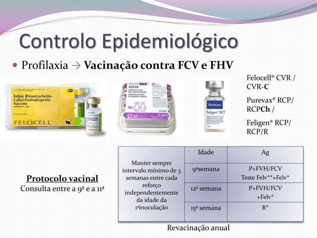 PPT - Coriza Felina PowerPoint Presentation - ID:878706