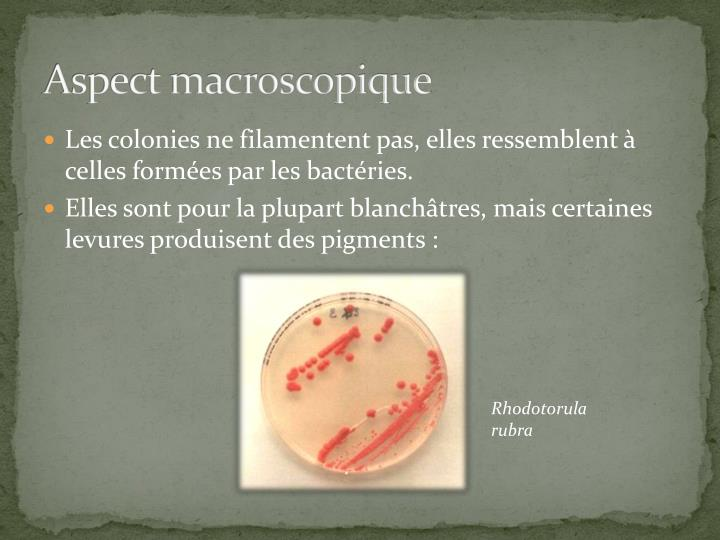 Aspect macroscopique