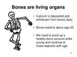 bones are living organs