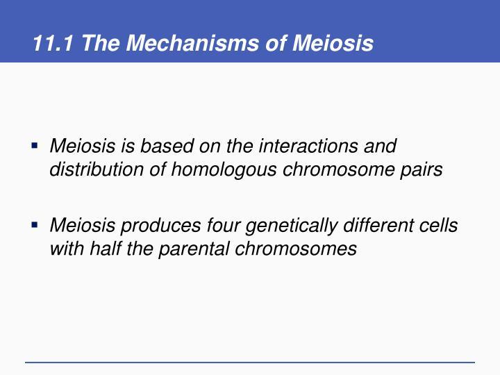 11 1 the mechanisms of meiosis