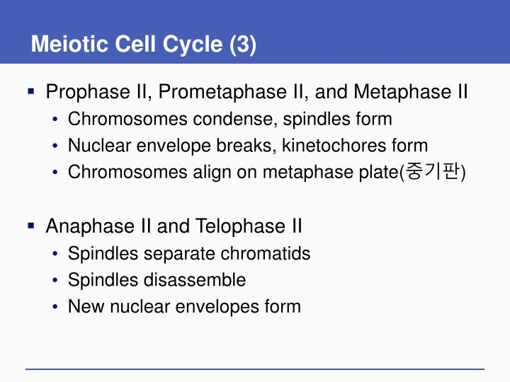 Meiotic Cell Cycle (3)