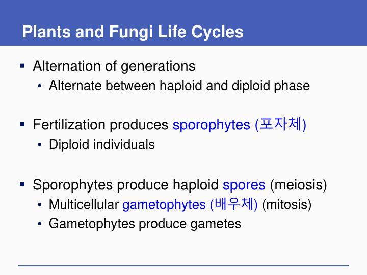 Plants and Fungi Life Cycles