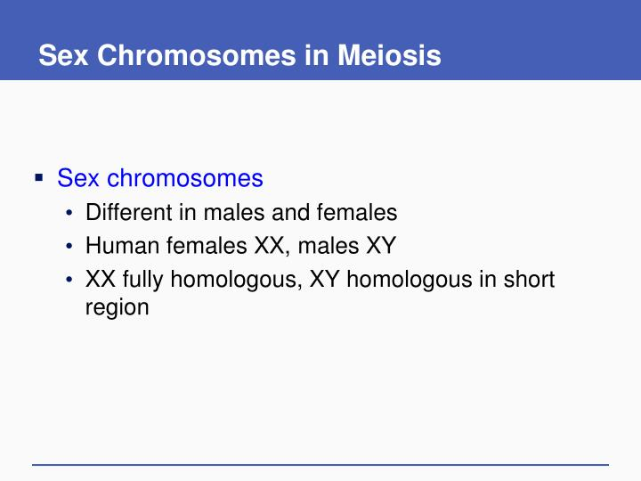 Sex Chromosomes in Meiosis