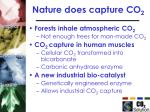 nature does capture co 2