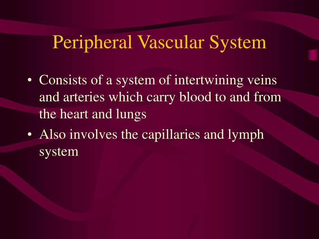 peripheral vascular system l.