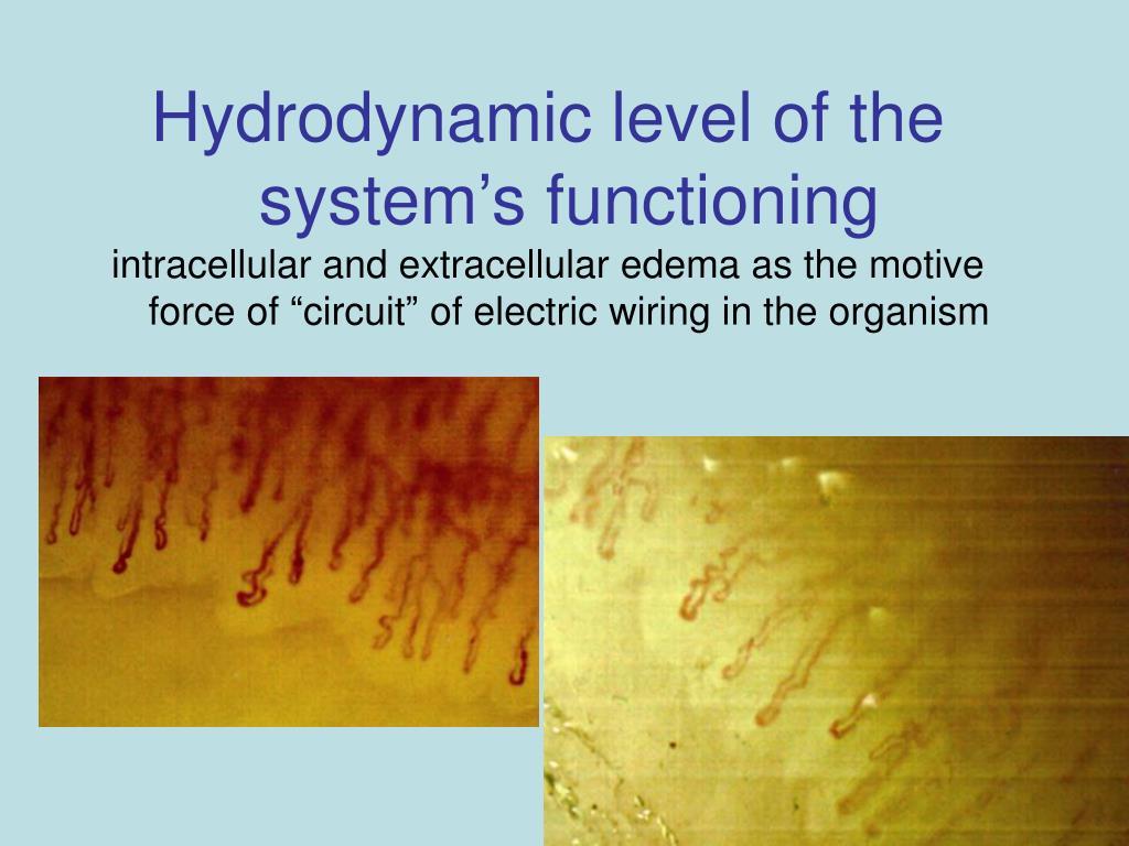 Hydrodynamic level of the system