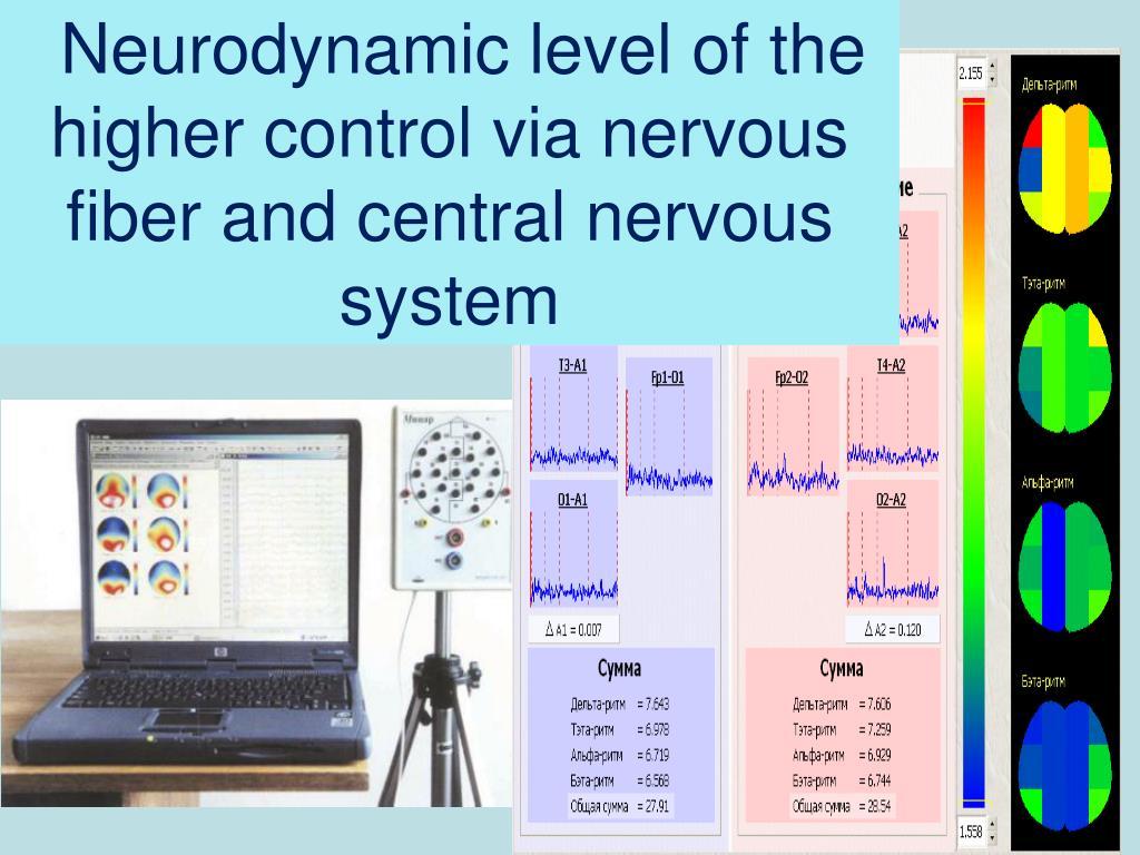 Neurodynamic