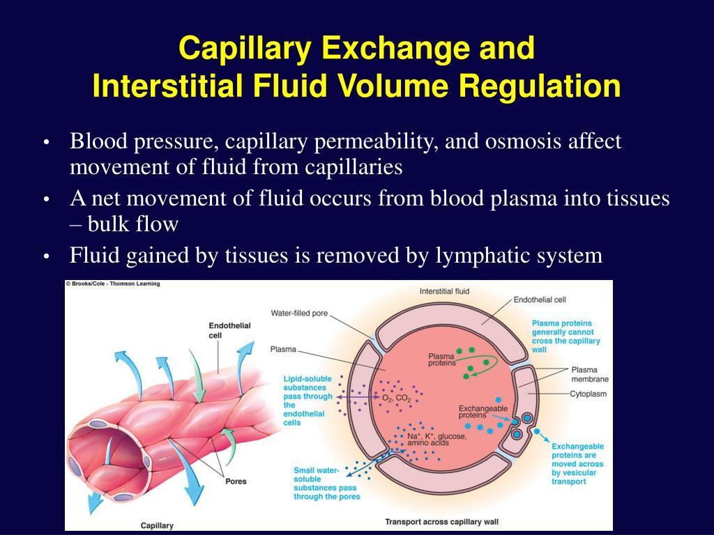 Capillary Exchange and