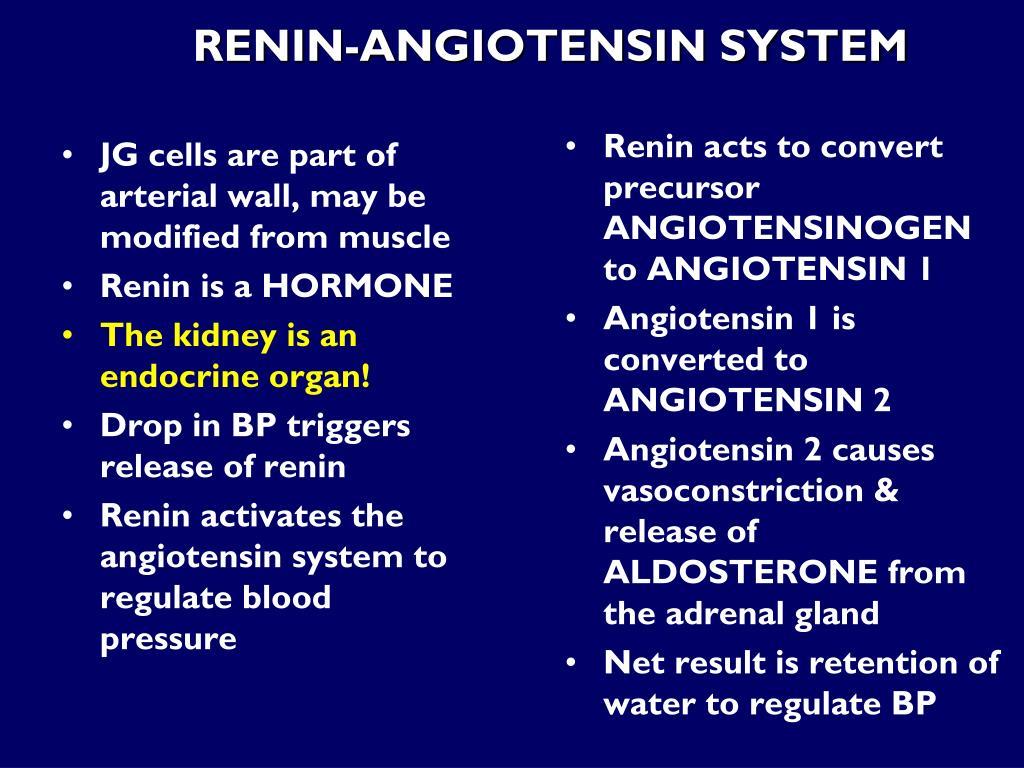 Renin acts to convert precursor ANGIOTENSINOGEN to ANGIOTENSIN 1